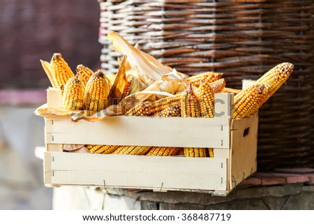 Fresh corn on cobs in a rustic wooden crate, closeup - stock photo