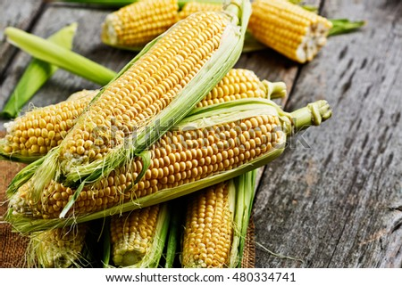 Fresh corn on cobs on rustic wooden table