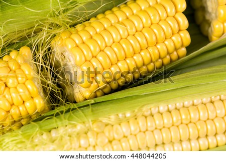 Fresh corn on the cob on a wooden table, close up with shallow depth of field.