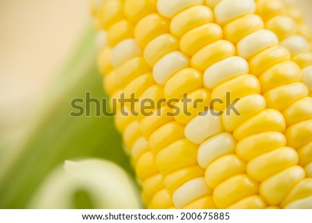 Fresh Corn - This is a shot of fresh corn on the cob. Shot with a shallow depth of field. - stock photo