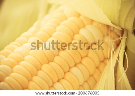 Fresh Corn - This is a shot of fresh corn on the cob. Shot with a warm retro color tone and a shallow depth of field. - stock photo