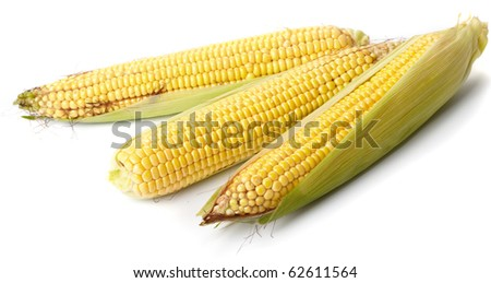 Fresh corn vegetable