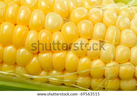 fresh corn vegetable with green leaves - stock photo