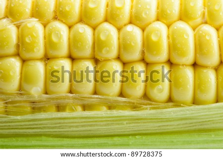 Fresh corn with green leaves - stock photo