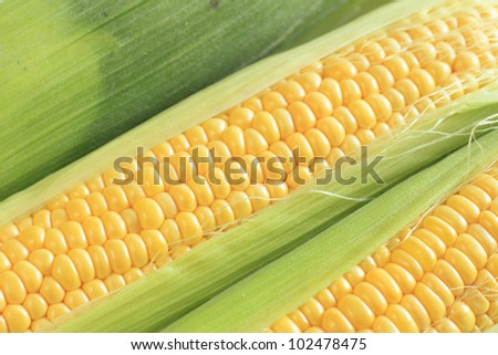 fresh corn with leaves isolated on white background