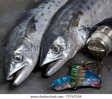Spanish mackerel stock images royalty free images for Fish in spanish