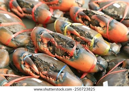 Fresh crab in thai market at Bangkok , Thailand - stock photo