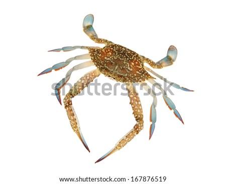 Fresh crab isolated on white background - stock photo