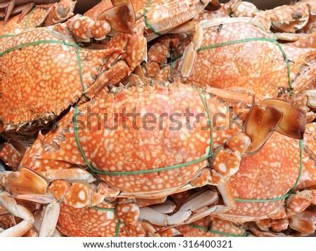 Fresh Crabs - stock photo