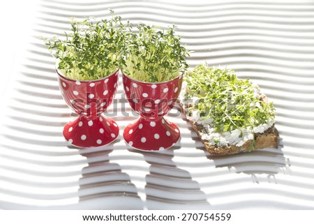 fresh cress in egg cup and whole corn bread (lepidium sativum) - stock photo