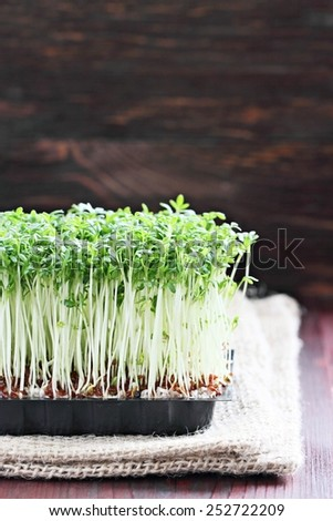Fresh cress on a rustic wooden table.Selective focus. - stock photo