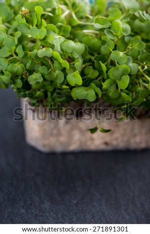 Fresh cress salad on black slate background - stock photo