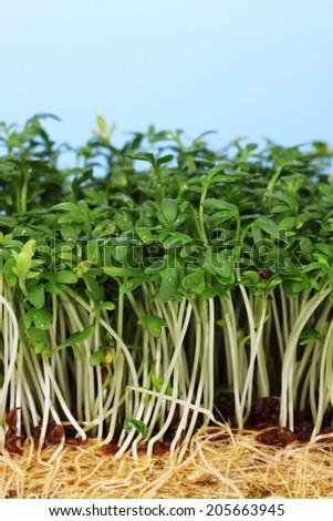 Fresh cress salad on blue background - stock photo