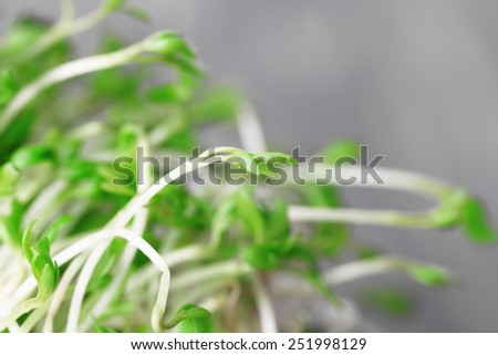 Fresh cress salad on light blurred background - stock photo