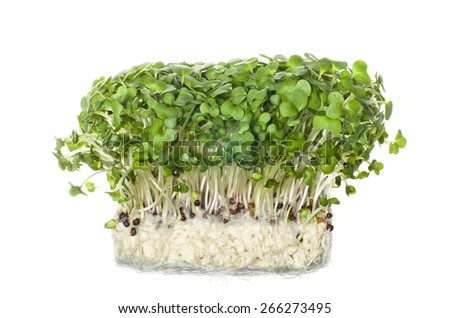 Fresh cress salad on white background. Selective focus - stock photo