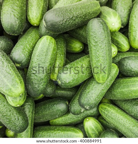 fresh cucumber.  Cucumber background