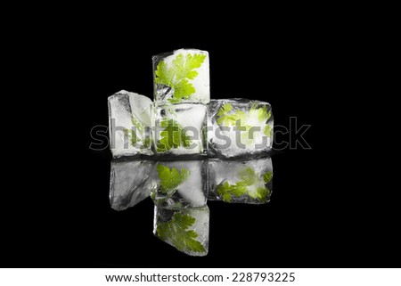 Fresh culinary herbs basil and parsley frozen in ice cubes frozen in black background. Fresh cooking herbs. - stock photo