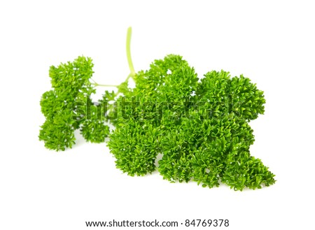 fresh curled leaf parsley isolated on a white background
