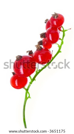 fresh currant on a white background