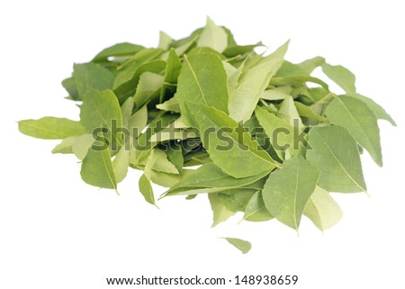 Fresh Curry Leaves Non sharpen file - stock photo