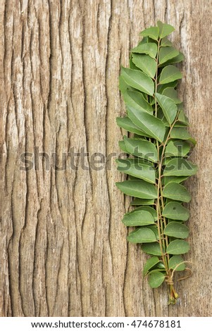 Fresh Curry Leaves w Copy Space; non-sharpened file