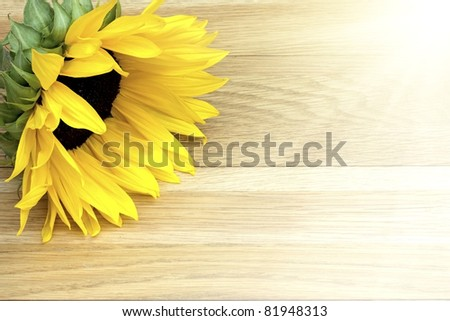 Fresh cut flower laying on a wooden table in sunlight - stock photo