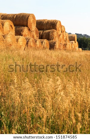 Fresh cut hay dried, rolled and stacked at sunset on the ranch. - stock photo