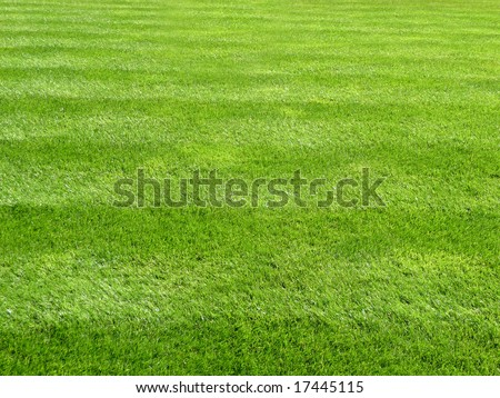 Fresh Cut Lawn Grass