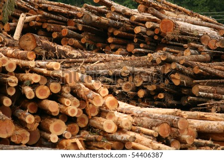 Fresh Cut Logs - stock photo