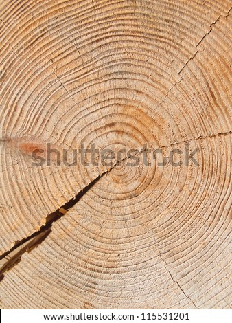 Fresh cut on the tree at the lumber yard - stock photo