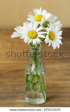 Fresh daisy chamomile flowers  on wooden background