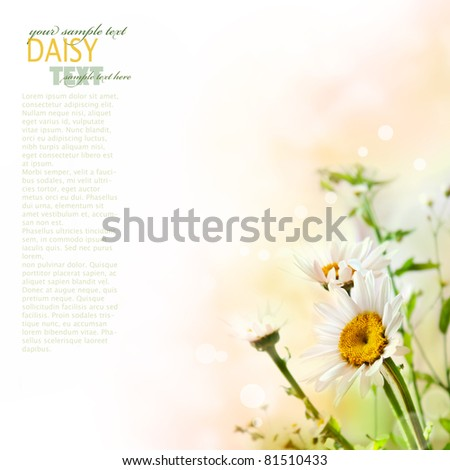 Fresh daisy with wildflowers over colorful background - stock photo