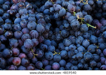 Fresh dark red grapes at market place - stock photo