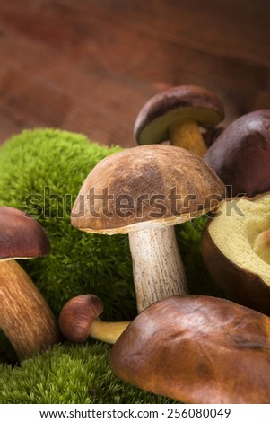 Fresh delicious mushrooms with moss on brown wooden background. Seasonal mushroom picking. - stock photo