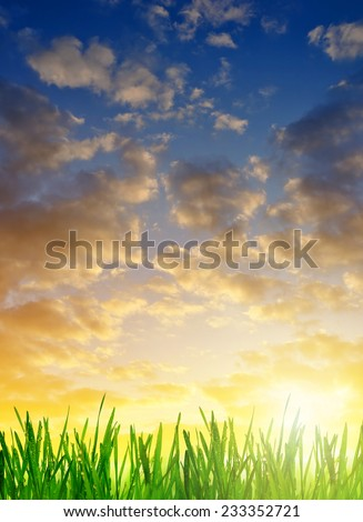 Fresh dewy green grass at sunrise. Nature background. - stock photo