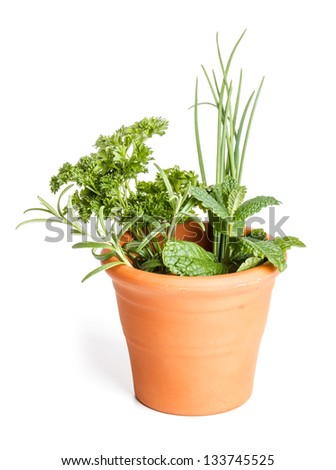 Fresh different herbs in clay pot