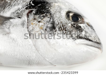 Fresh dorado fish isolated on white - stock photo