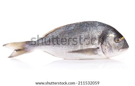 Fresh dorado fish. Isolated on white background - stock photo