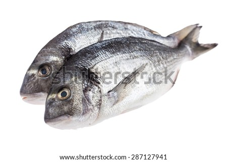Fresh dorado fish isolated on white background - stock photo