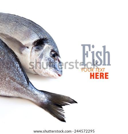 Fresh dorado fish isolated on white border - stock photo