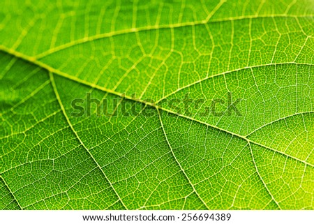 Fresh dreen leaf texture macro close-up - stock photo