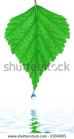 Fresh drop of dew on a birch leaf above spring - stock photo