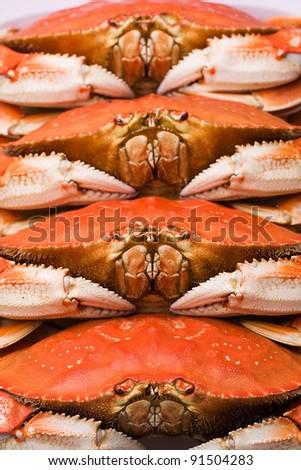 Fresh Dungeness Crab - stock photo