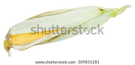 fresh ear of ripe corn isolated on white background