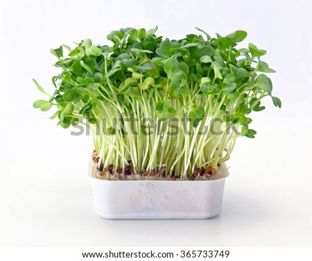 Fresh Edible Healthy Watercress in Tray - stock photo