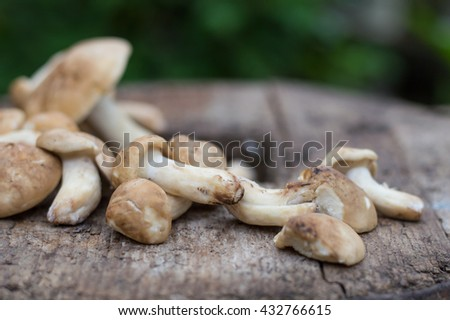 Fresh edible mushrooms on a wooden board. - stock photo