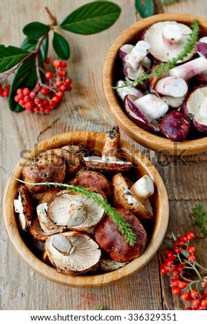Fresh edible wild mushrooms - stock photo
