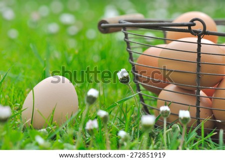 fresh egg in the grass among the daisies next to a basket
