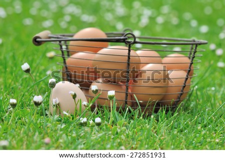 fresh egg in the grass among the daisies next to a basket - stock photo