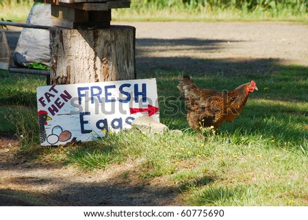 Fresh Eggs from the Fat Hen - stock photo